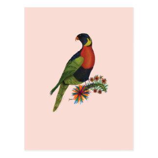 loro del lorikeet del arco iris, fernandes tony postales