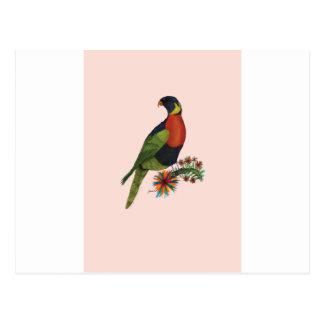 loro del lorikeet del arco iris, fernandes tony postal