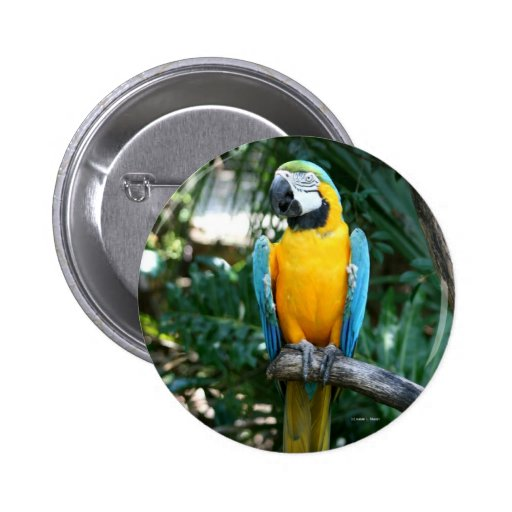Loro del macaw del azul y del oro contra árboles v pins