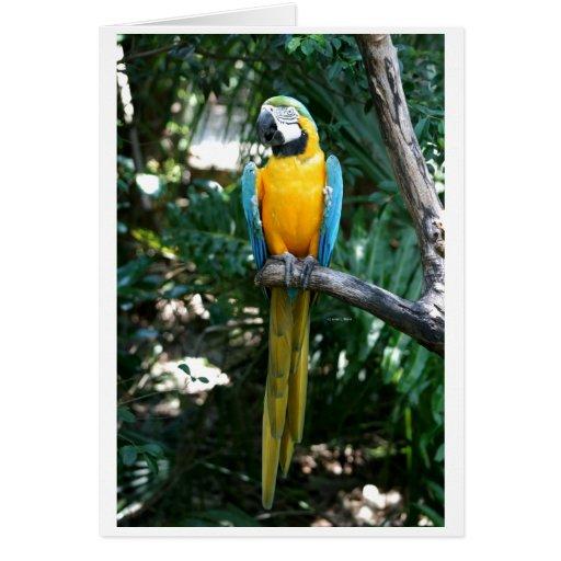 Loro del macaw del azul y del oro contra árboles v felicitación