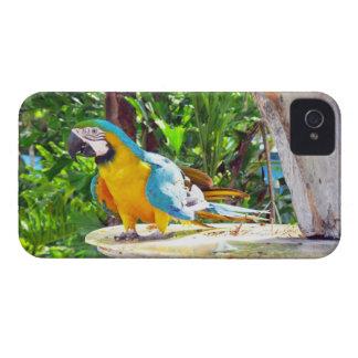 Loro del Macaw del azul y del oro Case-Mate iPhone 4 Funda