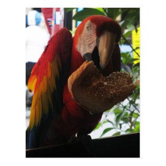 Loro del Macaw del escarlata que come la tostada Postales