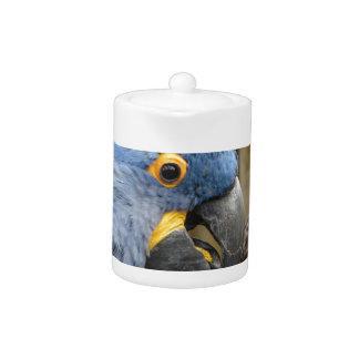 Loro del Macaw del jacinto