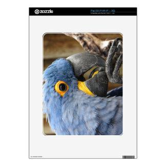 Loro del Macaw del jacinto Calcomanías Para iPad