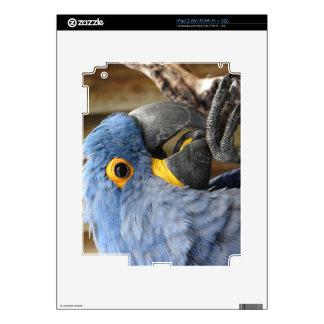 Loro del Macaw del jacinto iPad 2 Calcomanía