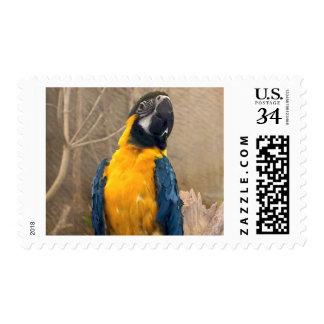 Loro del Macaw - fashionista de la pluma Timbre Postal