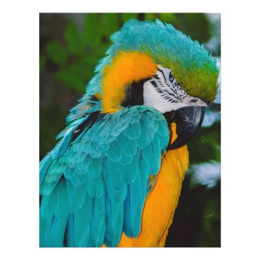 Loro del Macaw Tarjetones