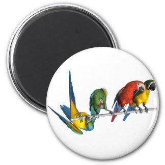 Loro del Macaw Imanes De Nevera