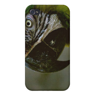 Loro del Macaw iPhone 4 Protector