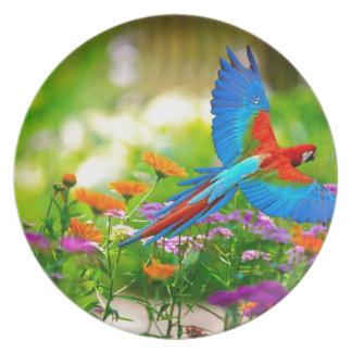 Loro del Macaw Plato De Comida
