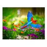 Loro del Macaw Tarjeta Postal