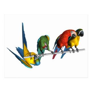 Loro del Macaw Tarjetas Postales