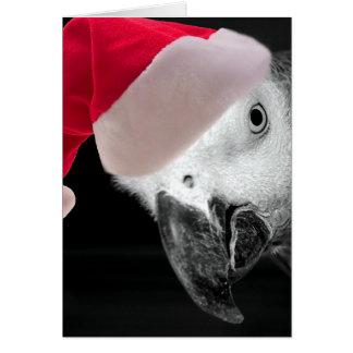 Loro del navidad tarjetas