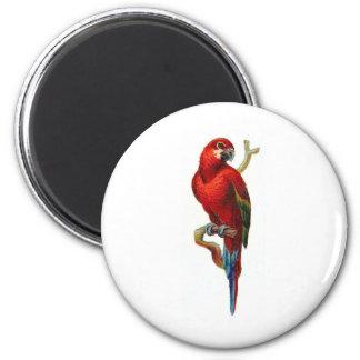 Loro del rojo del Macaw Imán Redondo 5 Cm
