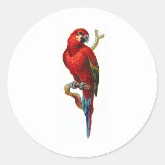 Loro del rojo del Macaw Pegatina Redonda