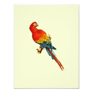 """Loro Desing de Macaw* del *Scarlet del vintage Invitación 4.25"""" X 5.5"""""""