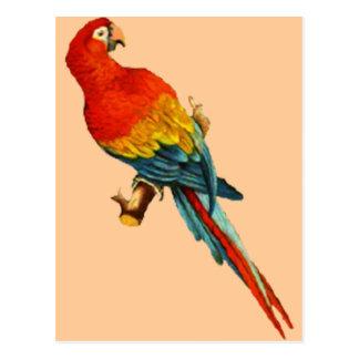 Loro Desing de Macaw* del *Scarlet del vintage Tarjeta Postal