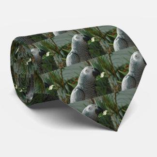 Loro dignificado del gris africano corbatas