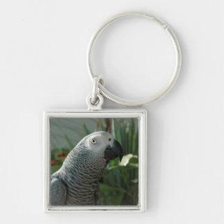 Loro dignificado del gris africano llavero cuadrado plateado