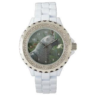 Loro dignificado del gris africano relojes de mano