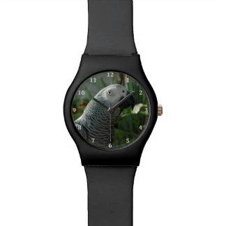 Loro dignificado del gris africano reloj