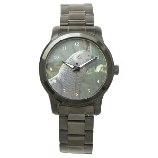 Loro dignificado del gris africano relojes