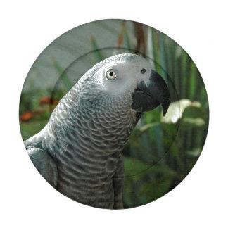 Loro dignificado del gris africano paquete pequeño de tapabotones