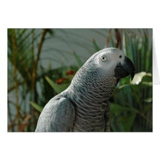 Loro dignificado del gris africano tarjeta de felicitación