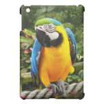 Loro exótico del Macaw