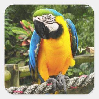 Loro exótico del Macaw Pegatina Cuadrada