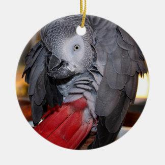 Loro flexible del gris africano de Congo con la Adorno Navideño Redondo De Cerámica