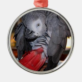 Loro flexible del gris africano de Congo con la Adorno Navideño Redondo De Metal