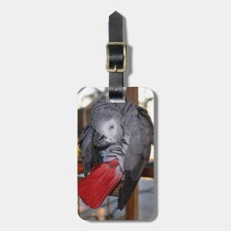Loro flexible del gris africano de Congo con la Etiquetas Para Equipaje