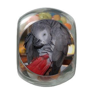 Loro flexible del gris africano de Congo con la Frascos Cristal