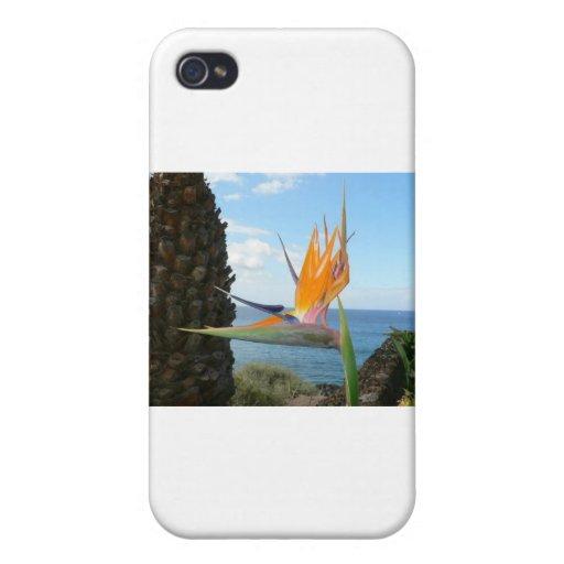 loro-flor iPhone 4 cárcasas