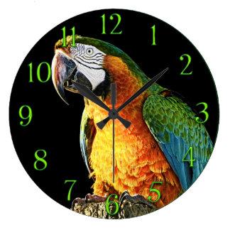 Loro grande del naranja y del trullo en un tocón relojes