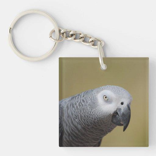 Loro gris bonito llaveros