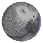 Loro gris plato