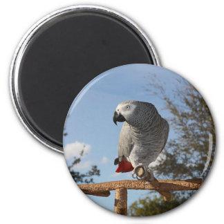 Loro imponente del gris africano imán redondo 5 cm