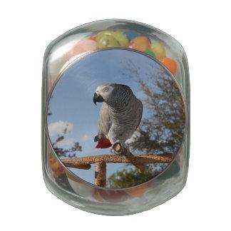 Loro imponente del gris africano jarrones de cristal