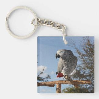 Loro imponente del gris africano llavero cuadrado acrílico a doble cara