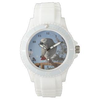 Loro imponente del gris africano reloj
