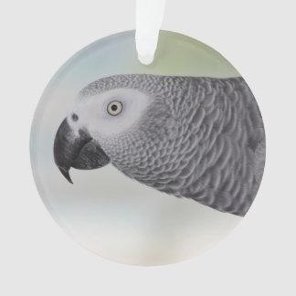 Loro magnífico del gris africano