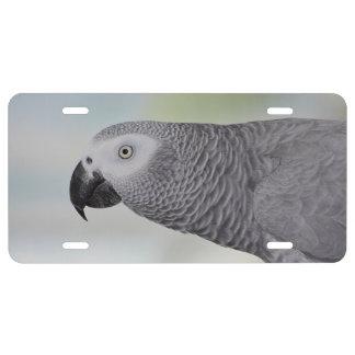 Loro magnífico del gris africano placa de matrícula