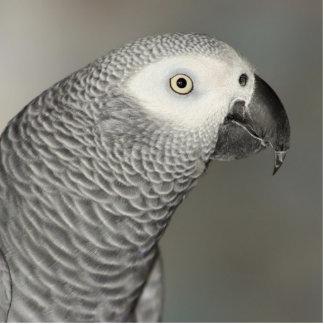 Loro majestuoso del gris africano imán fotoescultura