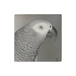 Loro majestuoso del gris africano imán de piedra