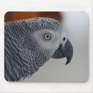 Loro majestuoso del gris africano mousepad