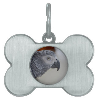 Loro majestuoso del gris africano placas de mascota