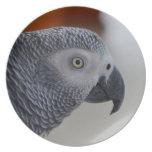 Loro majestuoso del gris africano plato para fiesta