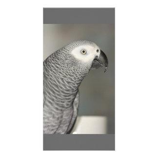 Loro majestuoso del gris africano tarjeta personal con foto
